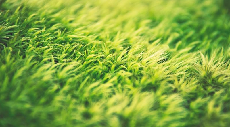 5 Ways to Fake It with Artificial Grass